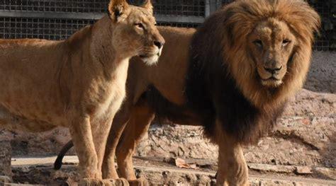 Entradas al Zoo de Barcelona a precio de risa y con 6 ...