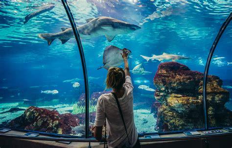 Entradas gratis para el Aquàrium de Barcelona  con una ...