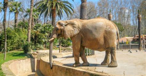 Entradas para Zoo de Barcelona 10% dto  Barcelona ...
