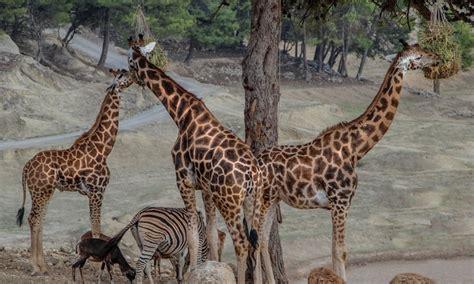 Entradas Safari Aitana | Taquilla.com