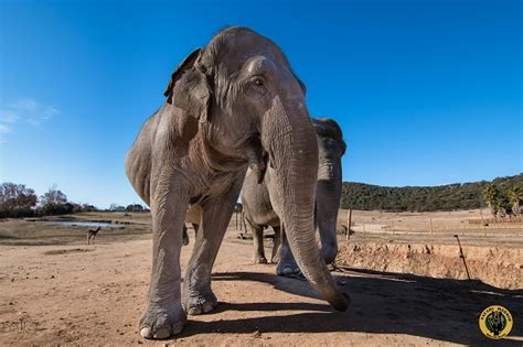 Entradas Safari Madrid   entradas.com