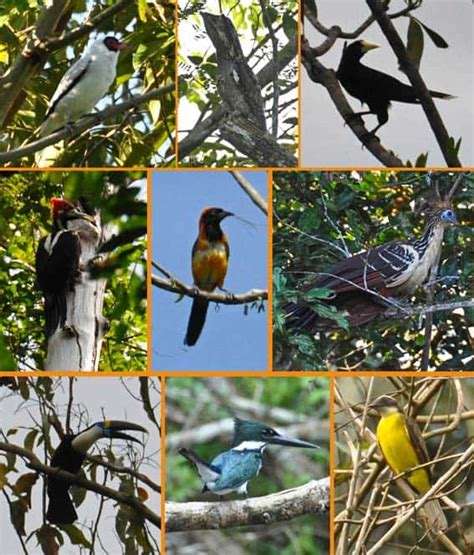 Entre animales de la selva amazónica cerca de Manaus, Brasil