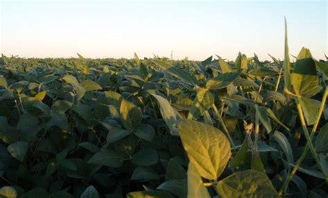 Entre Ríos: se debió cosechar 25 quintales de soja por ...