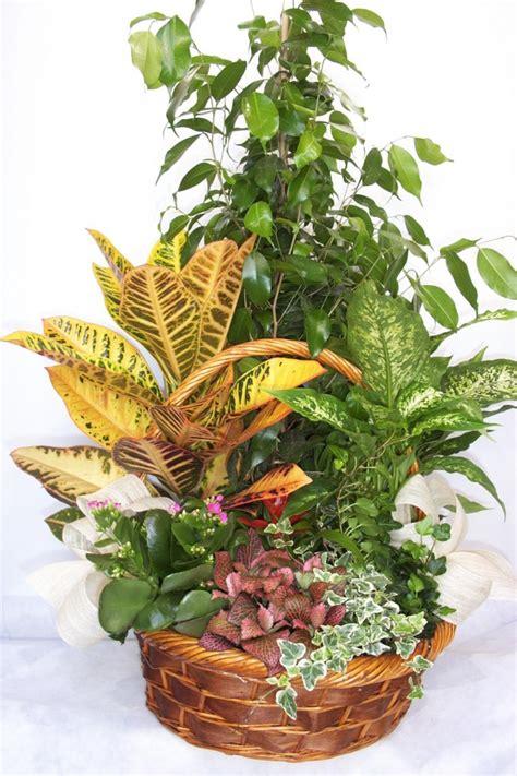 Enviar Plantas a domicilio   Tenerife | El Draguito Garden ...