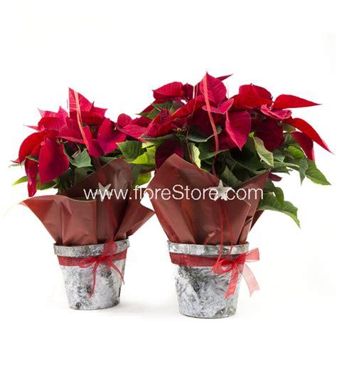 Enviar plantas de Navidad a domicilio   FloreStore