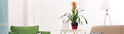 Envío de Plantas a Domicilio   FloraQueen