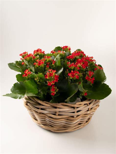 Envío de plantas a domicilio   Floristería Ilaga Tafalla