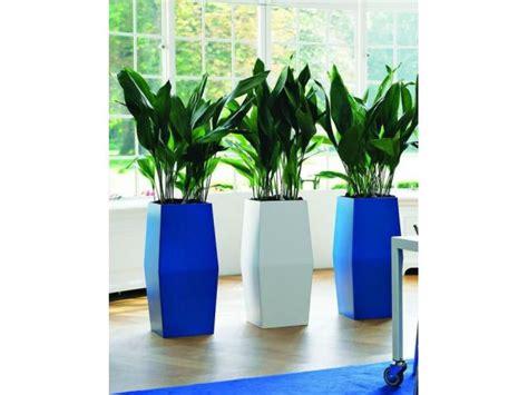Envio de plantas a domicilio. Plantas de diseño interior y ...