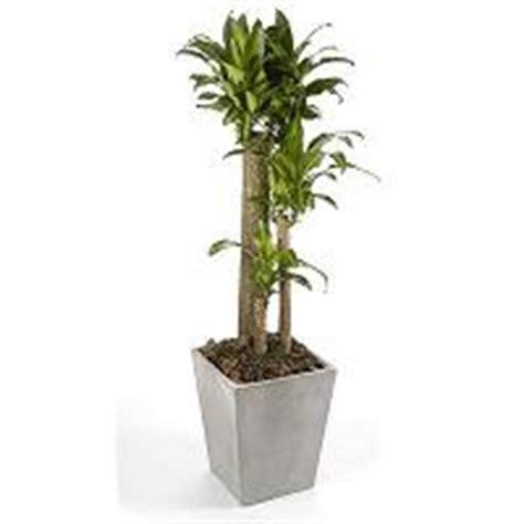 Envio de plantas a domicilio plantas de interior y ...