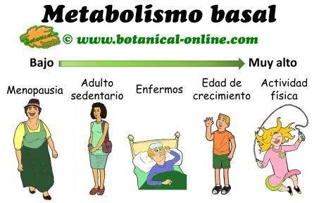 Equipo 5 física : Ritmo metabólico basal