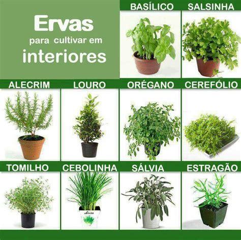 Ervas aromáticas | Hortas pequenas, Hortas verticais, Ervas