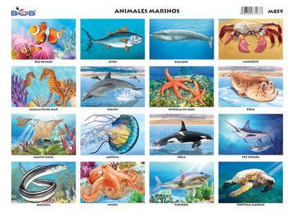 [:es]Animales marinos[:]   Ediciones Bob