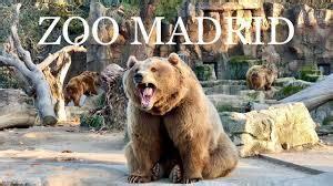 ES NOTICIA. Zoo de Madrid ofrece descuentos especiales ...