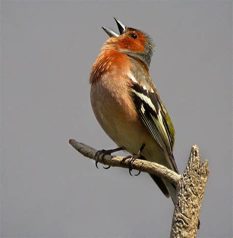 Escritos con alma: Los pájaros cantan en invierno