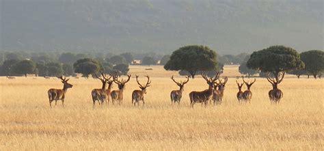 eshijar : VIAJAR POR ESPAÑA : El Parque Nacional de ...