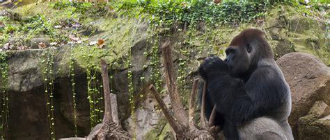 Espacio Life Tritón del Montseny | Zoo Barcelona