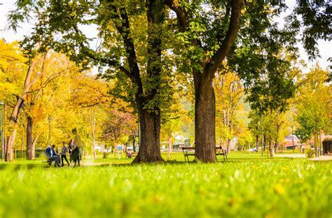 Espais verds i ciutats: importants per al medi ambient ...