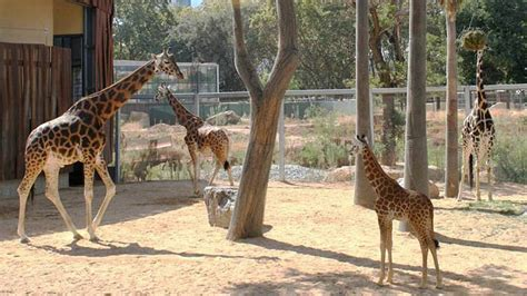 España: Barcelona aprobó la reconversión del zoológico ...