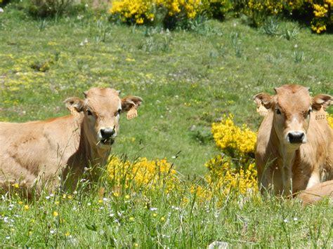 España, ejemplo de adaptación de la agricultura frente al ...