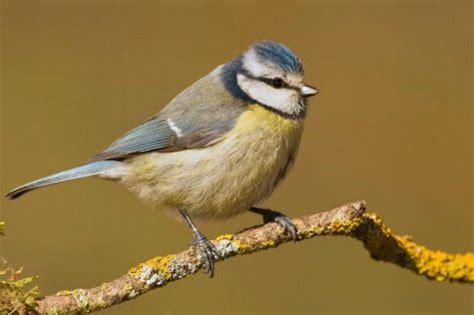 España gana 56 nuevas especies de aves en siete años ...