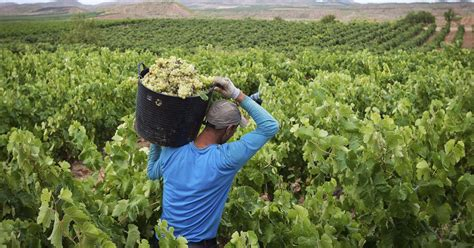 España lidera las exportaciones mundiales de vino, pero ...