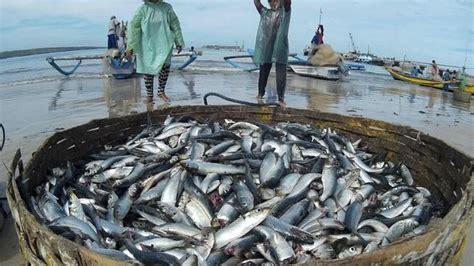 España sancionará a varias empresas pesqueras y ...