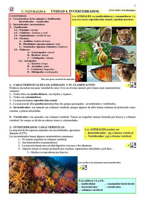 ESPAÑOL. Invertebrados by pablo gomez   Issuu