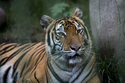 Especies de animales a punto de desaparecer