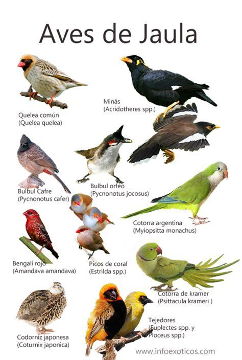 Especies de aves catalogadas como invasoras en España ...