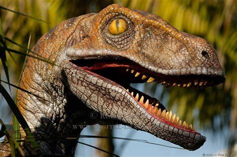 Especies de dinosaurios seguro no sabes muchas    Info ...