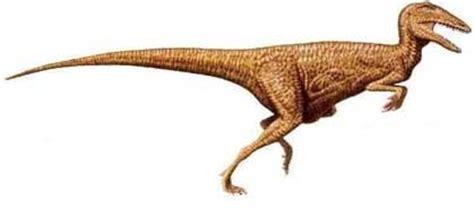Especies de dinosaurios2   Taringa!