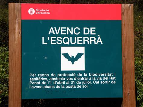 espeleobloc: Les migracions dels ratpenats de l'Esquerrà