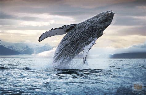 Esperando a los Búhos: De maestros y ballenas