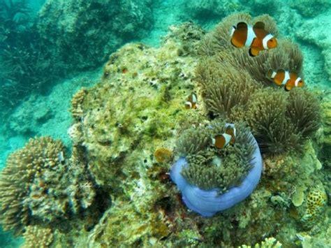 Esponja de mar: qué es y características   te lo contamos todo