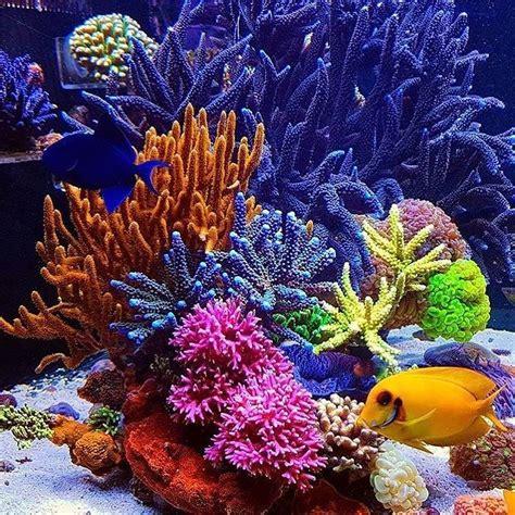 ESPONJAS Son acuáticas y viven fijas al fondo. Se ...