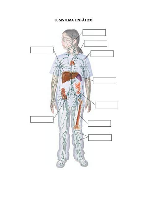 Esquemas mudos del aparato respiratorio, excretor y corazón