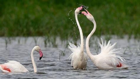Esta gran ave zancuda es una de las imágenes ...