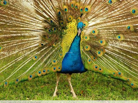 Estado Yaracuy: Fauna