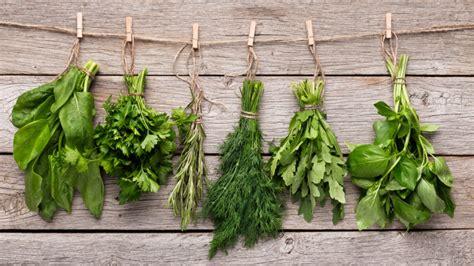 Estas son las 8 hierbas aromáticas imprescindibles para tu ...