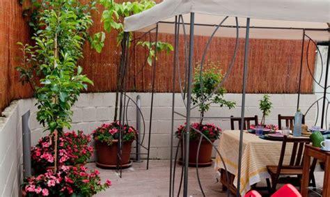 Estilo y hogar: Árboles frutales pequeños para terrazas o ...
