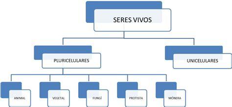 Estrategias De Aprendizaje : CLASIFICACIONES JERARQUICAS