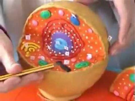 Estructura de la célula eucariota animal   YouTube