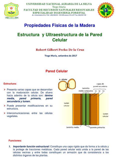 Estructura de la Pared celular.pptx   Pared celular ...