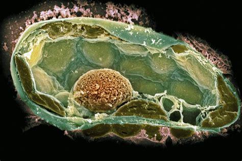 Estructura de pared celular y función
