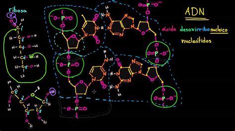 Estructura molecular del ADN | Macromoléculas | Biología ...