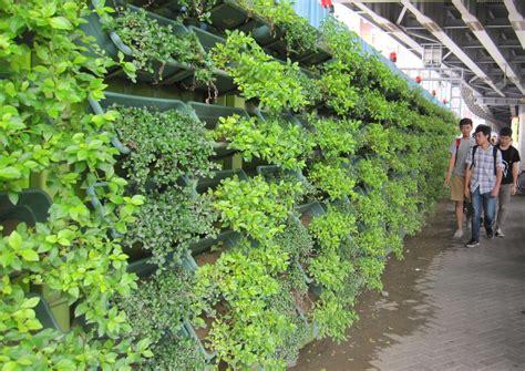 Estudiando Agricultura en Taiwán: Paredes verdes