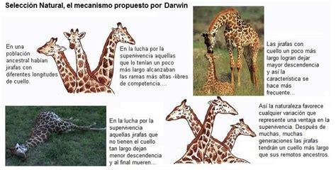 Estudiantes Digitales : Teoría de Darwin