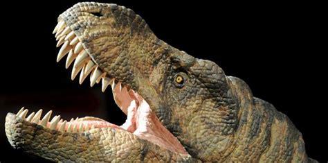 Estudio revela que no todos los dinosaurios carnívoros ...