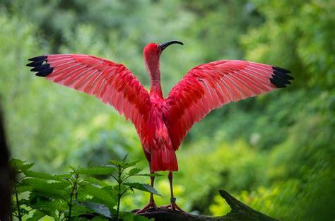 Estudo diz que há 18 mil espécies de aves no mundo – o ...