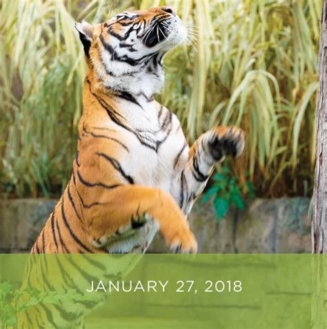 Events | Zoo Knoxville